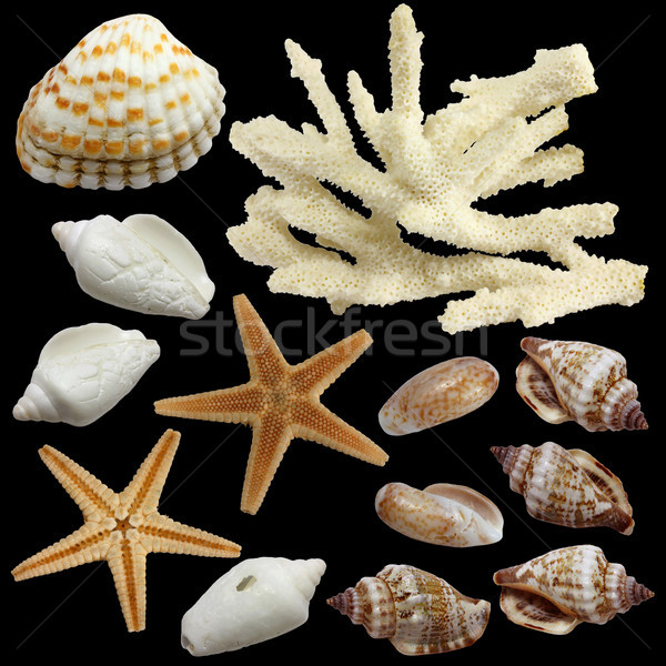 Small starfish and sea souvenirs on a black background Stock photo © yul30