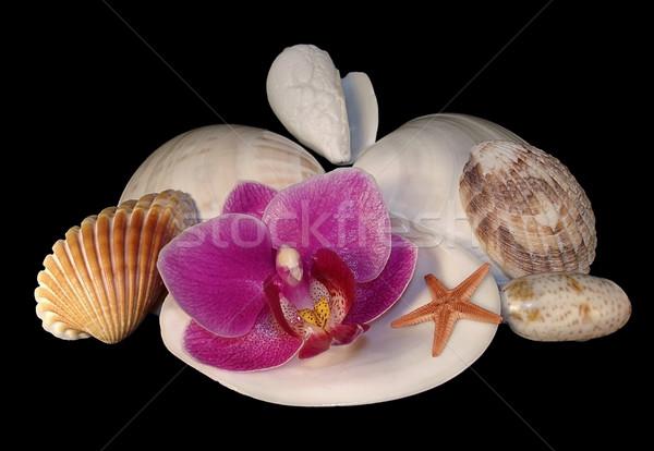 sea nature Stock photo © yul30