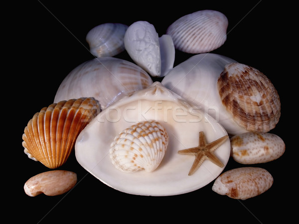 Lodges of mollusks Stock photo © yul30