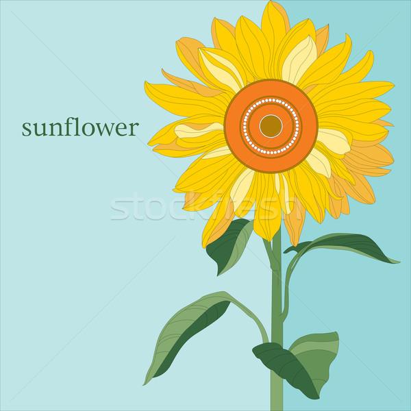 ornamental sunflower on blue sky Stock photo © yulia_mayevska