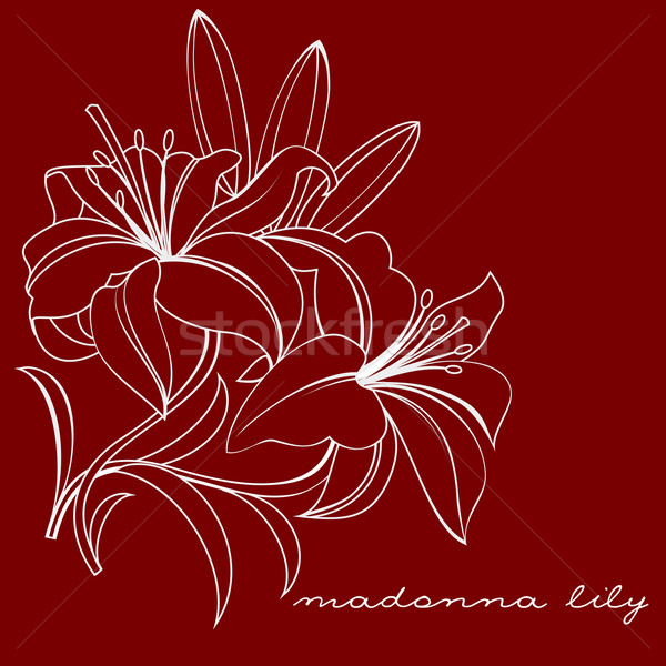 Lelie witte bloemen ontwerp achtergrond kaart Stockfoto © yulia_mayevska