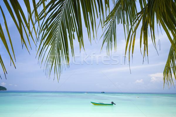 Strand kokosnoot bomen boom natuur landschap Stockfoto © yuliang11