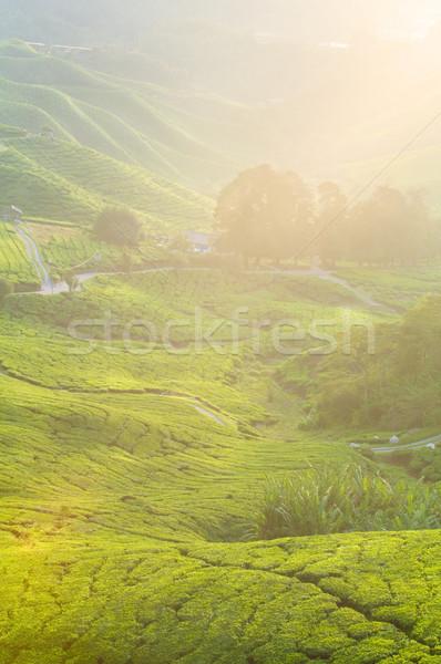Té plantación tierras altas madrugada alimentos sol Foto stock © yuliang11