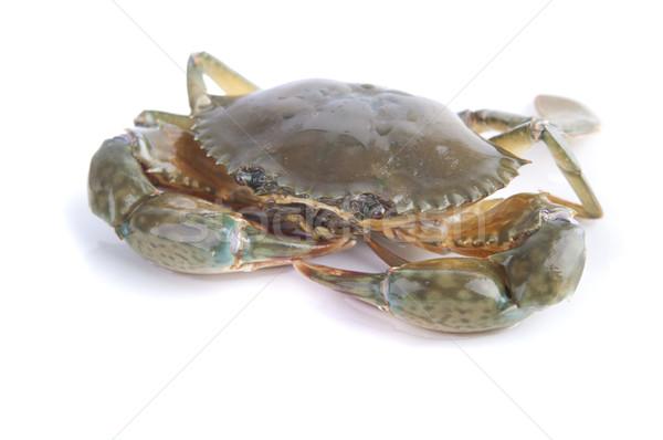 live crab Stock photo © yuliang11