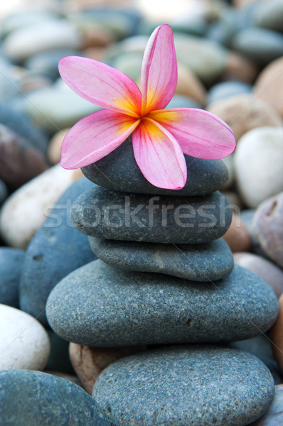 frangipani on  pebbles and rocks for spa purpose Stock photo © yuliang11