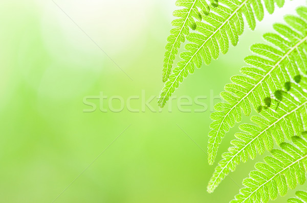 green leaf Stock photo © yuliang11