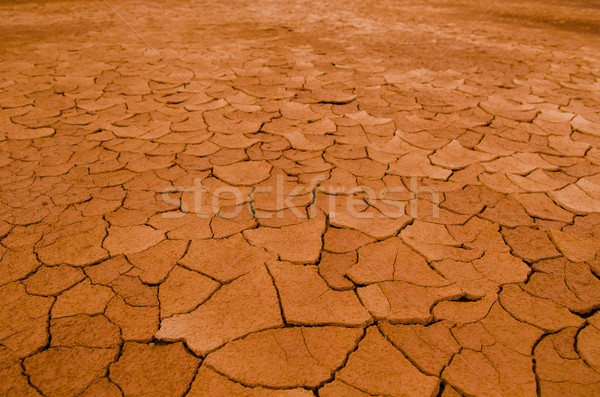 cracked earth Stock photo © yuliang11