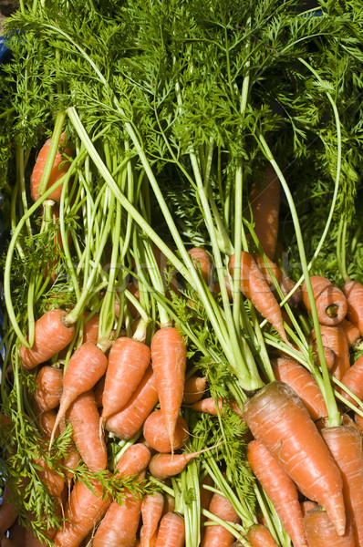 Taze havuç satış pazar yaprak yeşil Stok fotoğraf © yuliang11