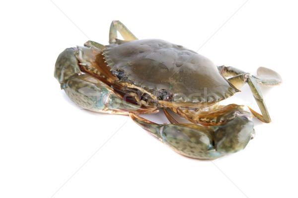 crab Stock photo © yuliang11