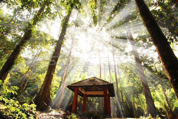 Yeşil orman ağaç ışık yaprak arka plan Stok fotoğraf © yuliang11