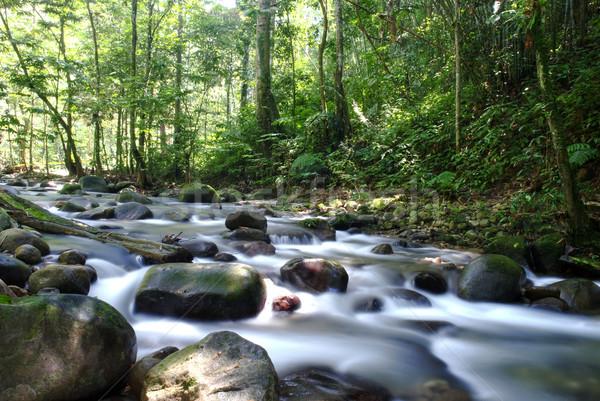 Waterval natuurlijke groene water bos achtergrond Stockfoto © yuliang11