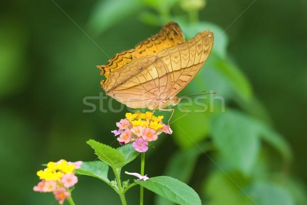 Schmetterling Blume Frühling Licht Garten Sommer Stock foto © yuliang11