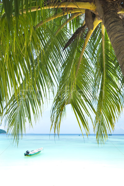 Foto d'archivio: Spiaggia · blu · cocco · primo · piano · albero · natura