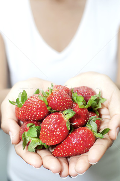 Fresh picked strawberries held over strawberry plants Stock photo © yuliang11