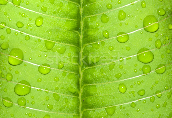 water-drop on a green leaf after rain Stock photo © yuliang11