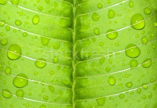水滴 緑色の葉 雨 水 春 食品 ストックフォト © yuliang11