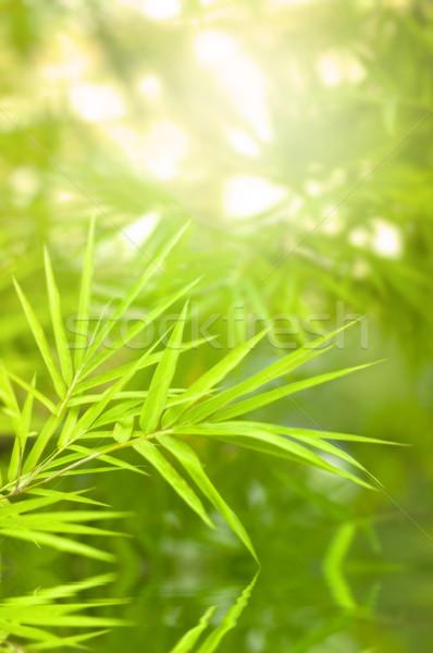 bamboo Stock photo © yuliang11