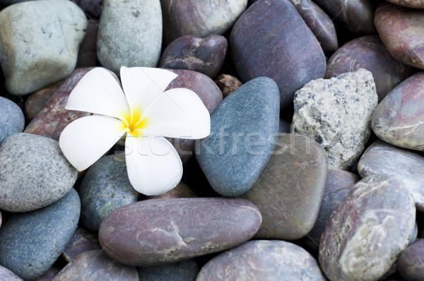 frangipani  Stock photo © yuliang11