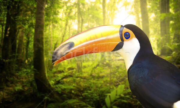 toucan Stock photo © yuliang11