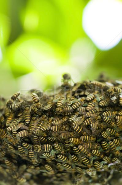 Arı kovan doğal bo gıda çalışmak Stok fotoğraf © yuliang11