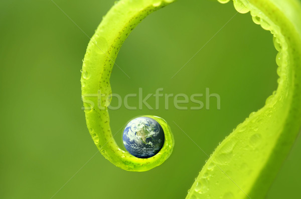 Stock photo: concept photo of earth on green nature ,Earth map by courtesy of