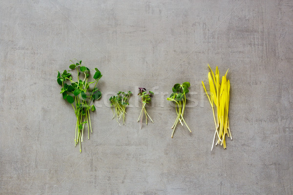 Healthy cress salad Stock photo © YuliyaGontar
