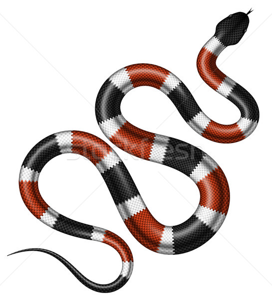 Coral snake vector illustration. Stock photo © YuriSchmidt