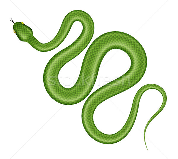 Green snake vector illustration. Stock photo © YuriSchmidt