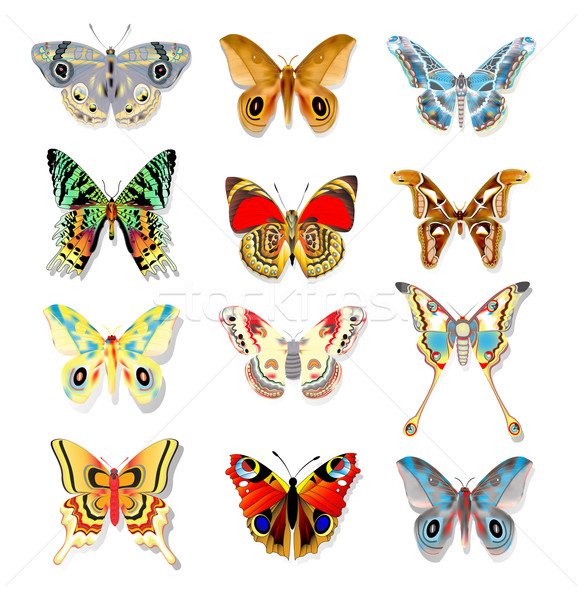 set of colorful butterflies on a white background Stock photo © yurkina
