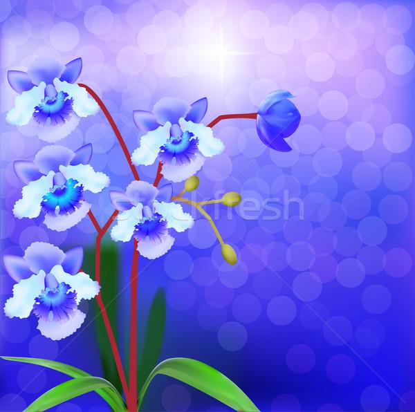Bush Orchid violet on a luminous background Stock photo © yurkina