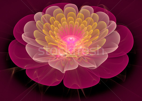 Illustration fractal flower gentle clear water lily Stock photo © yurkina