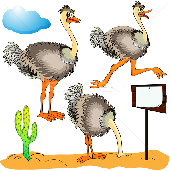 ostrich runs, covers head sand and cost(stand)s on background cloud and cactus Stock photo © yurkina