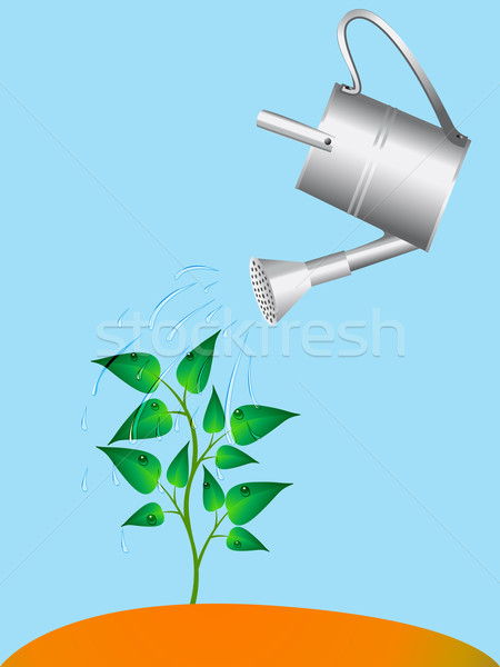 plant is watered from sprinkling can Stock photo © yurkina