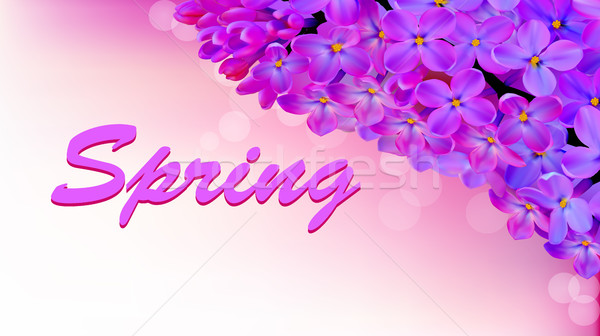 illustration spring background with beautiful blooming lilac Stock photo © yurkina