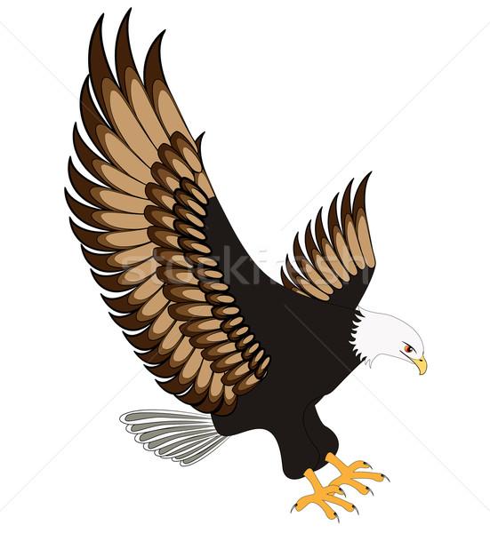 flying eagle insulated on white background Stock photo © yurkina