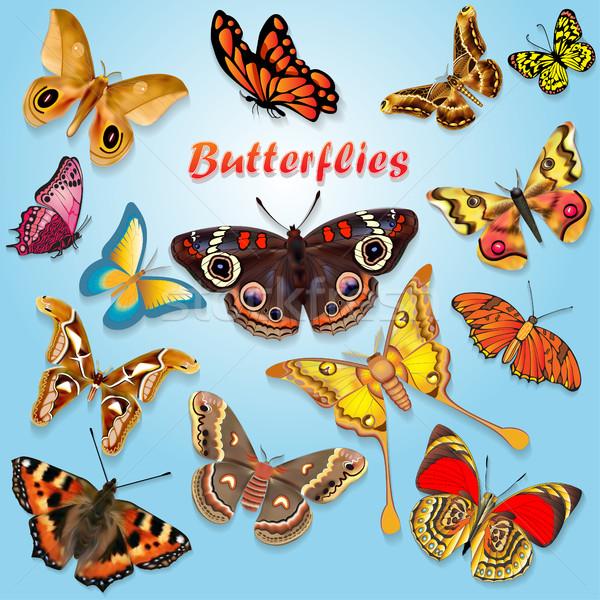 Színes illusztráció gyönyörű pillangók szett tavasz Stock fotó © yurkina