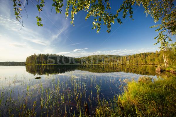 Сток-фото: лет · сцена · вечер · походов · лес · зеленый