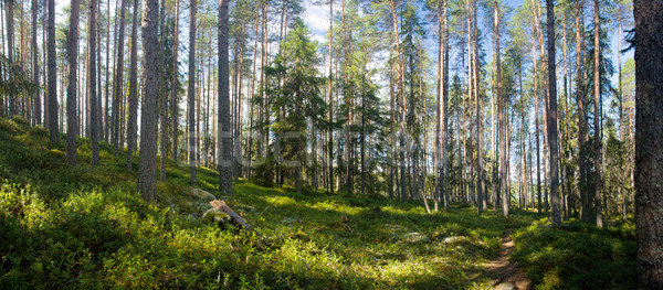 Zomer bos panoramisch wandelen weg Stockfoto © yurok