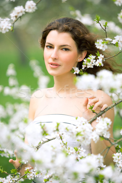 spring beauty Stock photo © yurok