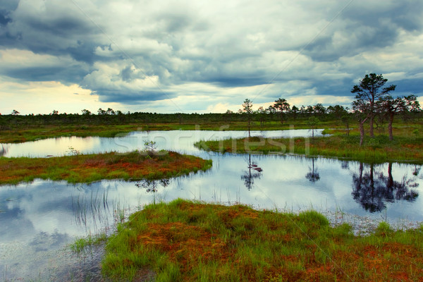 estonian bog Stock photo © yurok