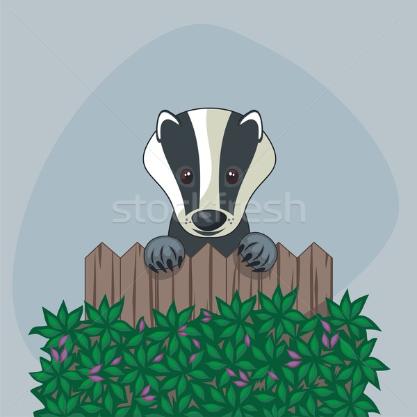 Cute Badger Stock photo © yurumi