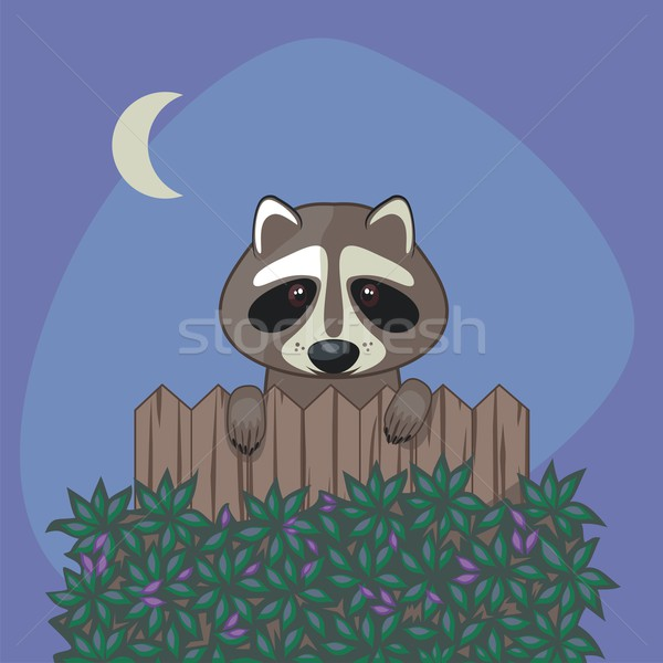 Cute wasbeer permanente omhoog houten hek Stockfoto © yurumi