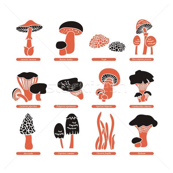 съедобный грибы набор различный грибы продовольствие Сток-фото © yurumi