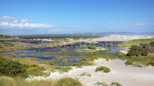 Hermanus Stock photo © zambezi