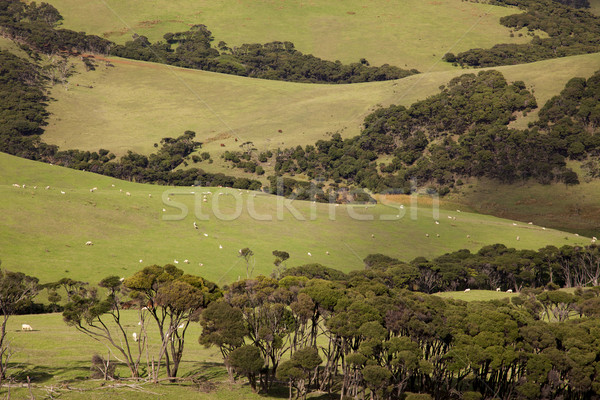 North Island Pasture Stock photo © zambezi