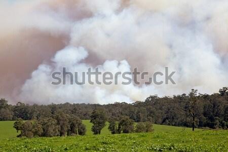Forest Fire Stock photo © zambezi