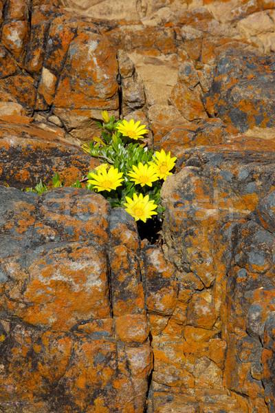 Rock and Flower Abstract Stock photo © zambezi