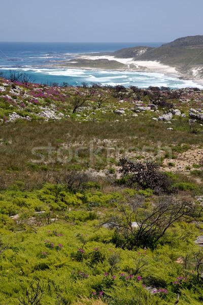Coastal Landcape Stock photo © zambezi