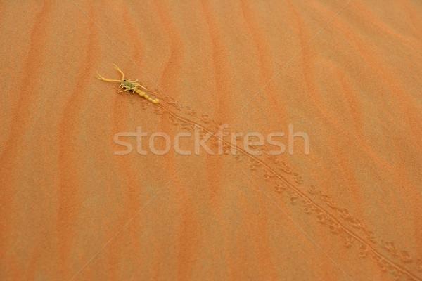 арабский скорпион ядовитый песчаная дюна пусто Сток-фото © zambezi