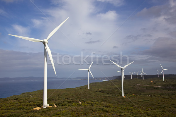 Albany Wind Farm Stock photo © zambezi